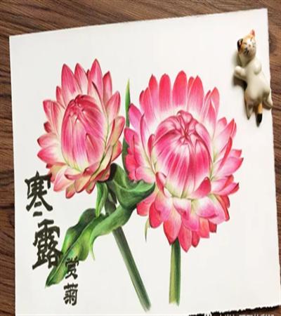 蜡菊怎么画?详细的彩铅画法是什么?