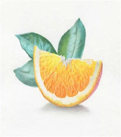 香橙怎么画?颜色冷暖如何区分?