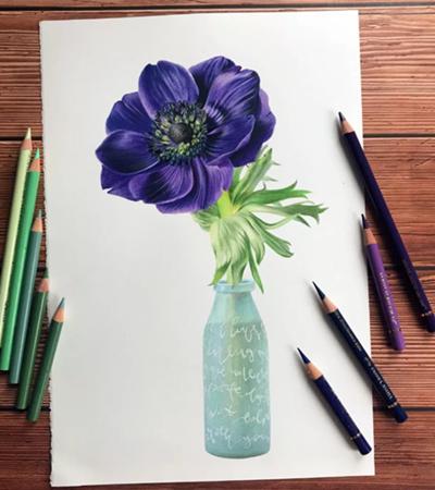 银莲花怎么画?详细的绘画过程是什么?