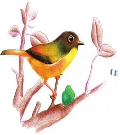 画眉鸟怎么画?教你画一只可爱的画眉