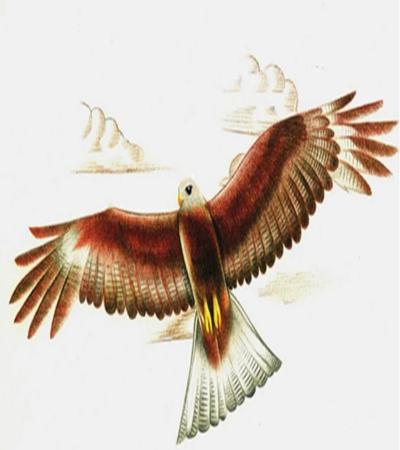 展翅的老鹰怎么画?绘画流程是什么?