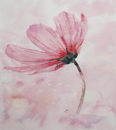 波斯菊怎么画?简单的水彩画法是什么?