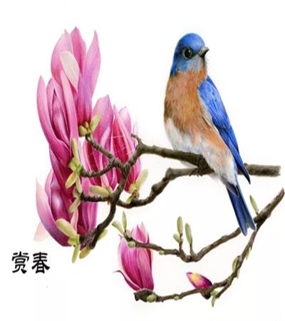 紫玉兰和小鸟怎么画?有哪些彩铅绘画步骤?