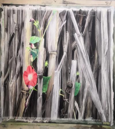 红色牵牛花怎么画?玉米棒的绘画步骤有几步?