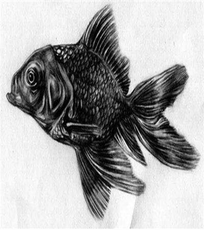 黑色金鱼怎么画?绘画步骤是什么?