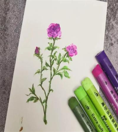 紫色月季花怎么画?绘画流程是什么?