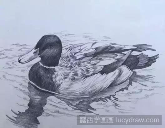 用点线面画一幅画简单_鸭子素描怎么画?动物素描绘画方法-露西学画画