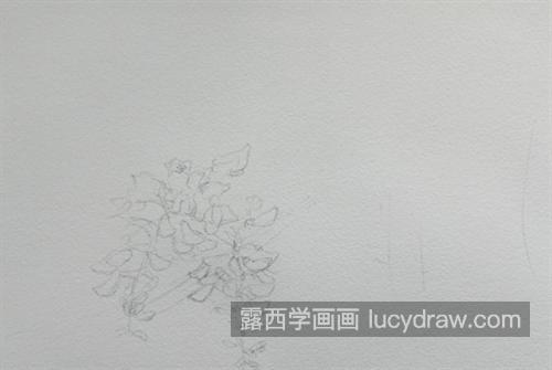 紫藤花怎么画